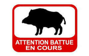 BATTUES AUX SANGLIER